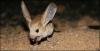 Pimientuka - HamsterStory criador de roedores