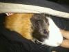 monoraa - HamsterStory criador de roedores