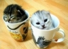 gatitogoku - HamsterStory criador de roedores