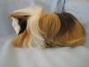 Donita- - HamsterStory criador de roedores