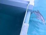 Delfín - (3 años)