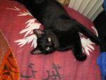 Gato Roméo - Macho (5 meses)