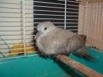 Pájaro - (4 meses)