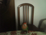 Pájaro - (1 año)