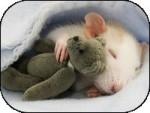 Ratón jery -   (Acaba de nacer)