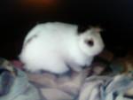 Flipeur - (9 meses)