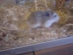 Hamster jojo -   (Acaba de nacer)
