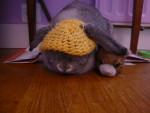 Pépine, son doudou et son bonnet - (3 años)