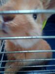 Ania - (5 meses)